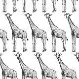 Imprimer le coloriage : Girafe, numéro f6064329