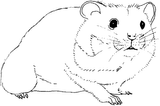 Imprimer le coloriage : Hamster, numéro 18186