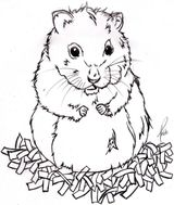 Imprimer le dessin en couleurs : Hamster, numéro 19524