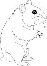 Imprimer le coloriage : Hamster, numéro 1ed8ccb