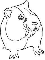 Imprimer le coloriage : Hamster, numéro 27874