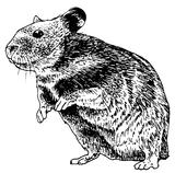 Imprimer le coloriage : Hamster, numéro 3432