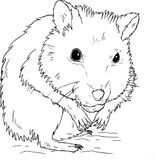 Imprimer le coloriage : Hamster, numéro 3adb5a66