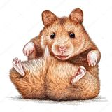 Imprimer le dessin en couleurs : Hamster, numéro 4f812a1