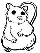 Imprimer le coloriage : Hamster, numéro 5305