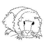 Imprimer le coloriage : Hamster, numéro 53947