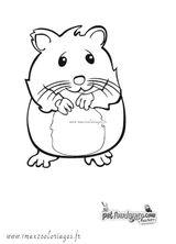 Imprimer le coloriage : Hamster, numéro 68570f36