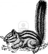Imprimer le coloriage : Hamster, numéro 68822