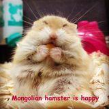 Dessin en couleurs imprimer animaux hamster num ro 70569 - Hamster russe panda ...