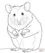 Imprimer le coloriage : Hamster, numéro 6e7f5b4c