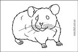 Imprimer le coloriage : Hamster, numéro 7172