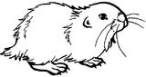 Imprimer le coloriage : Hamster, numéro 7182