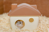 Imprimer le dessin en couleurs : Hamster, numéro baa3b150