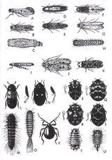 Imprimer le dessin en couleurs : Insectes, numéro 22489