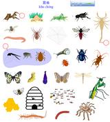 Imprimer le dessin en couleurs : Insectes, numéro 22490