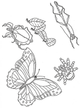 Imprimer le coloriage : Insectes, numéro 23795