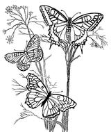 Imprimer le coloriage : Insectes, numéro 23799