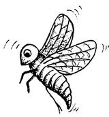 Imprimer le coloriage : Insectes, numéro 23806