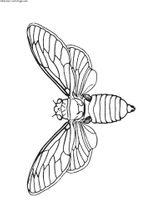 Imprimer le coloriage : Insectes, numéro 23808