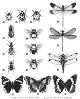 Imprimer le coloriage : Insectes, numéro 23810