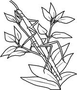 Imprimer le coloriage : Insectes, numéro 23813