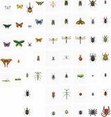 Imprimer le dessin en couleurs : Insectes, numéro 24772