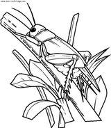 Imprimer le coloriage : Insectes, numéro 25658