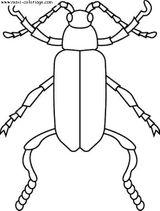 Imprimer le coloriage : Insectes, numéro 25668