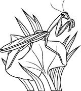 Imprimer le coloriage : Insectes, numéro 268258