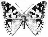 Imprimer le coloriage : Insectes, numéro 28171