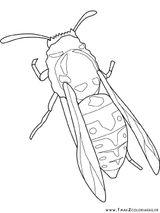 Imprimer le coloriage : Insectes, numéro 296780
