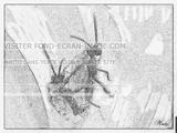 Imprimer le coloriage : Insectes, numéro 378129