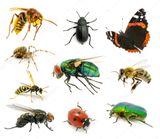 Imprimer le dessin en couleurs : Insectes, numéro 42ed9d4c