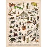 Imprimer le dessin en couleurs : Insectes, numéro 493119