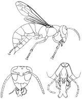 Imprimer le coloriage : Insectes, numéro 64578
