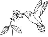 Imprimer le coloriage : Insectes, numéro 673129