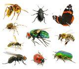 Imprimer le dessin en couleurs : Insectes, numéro 684389