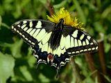 Imprimer le dessin en couleurs : Insectes, numéro 684408