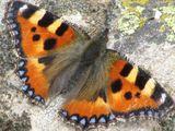 Imprimer le dessin en couleurs : Insectes, numéro 684410