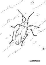 Imprimer le coloriage : Insectes, numéro 6b1029ea