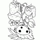 Imprimer le coloriage : Coccinelle, numéro 23860