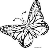 Imprimer le coloriage : Papillon, numéro 142637