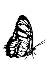 Imprimer le coloriage : Papillon, numéro 24064