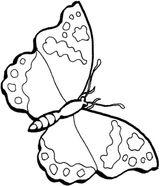Imprimer le coloriage : Papillon, numéro 24077