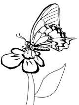 Imprimer le coloriage : Papillon, numéro 24078