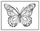 Imprimer le coloriage : Papillon numéro 64887