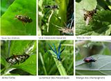 Imprimer le dessin en couleurs : Insectes, numéro a7aef19b
