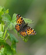 Imprimer le dessin en couleurs : Insectes, numéro e425ae4