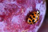 Imprimer le dessin en couleurs : Insectes, numéro f35b51b4