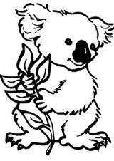 Imprimer le coloriage : Koala, numéro 1ec11b97